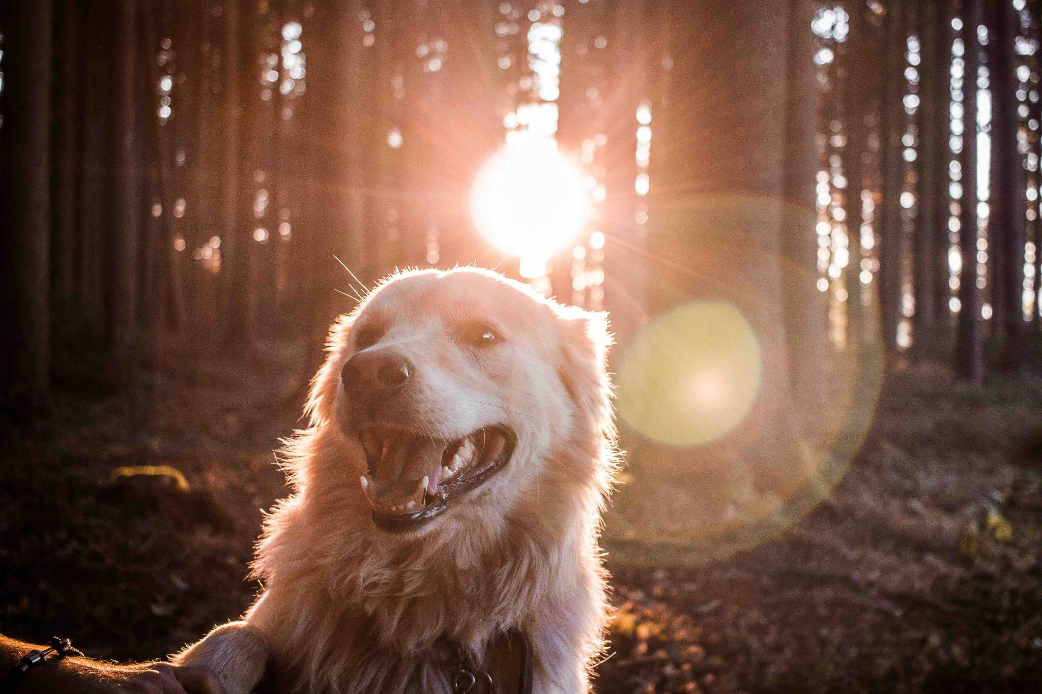 What Dogs can Teach Us about Great Communications